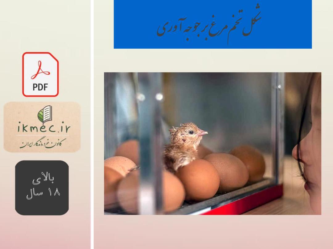 شکل تخم مرغ بر جوجه آوری