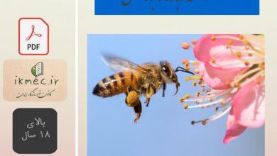 ۱۶۰ نکته درباره زنبور عسل