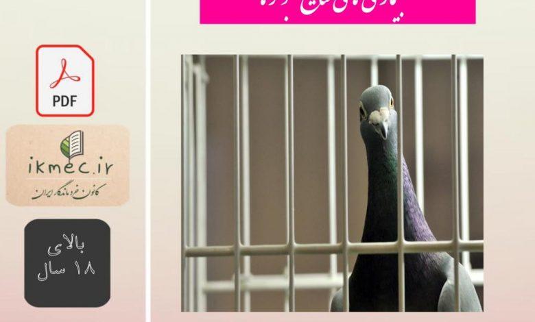 بیماری های شایع کبوتر